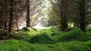 bosuqe iluminado por la luz ambiental del atardecer